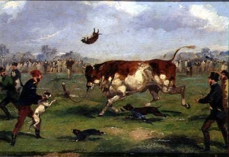 luta.touros
