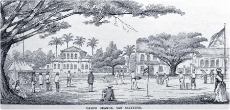 cricket-brasil
